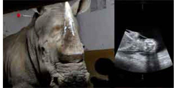 Ein Nashorn aus dem Eis
