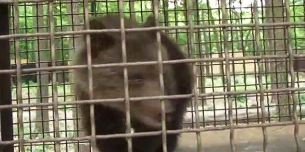 LIVE: Baby-Bär bekommt Luxus-Park
