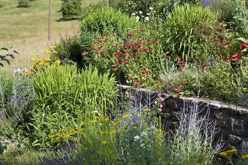 Garten - Garten-CH - Naturgarten - Bild 3