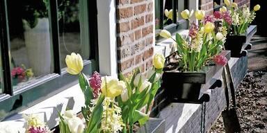 Nazissen und Tulpen sind für Allergiker geeignet