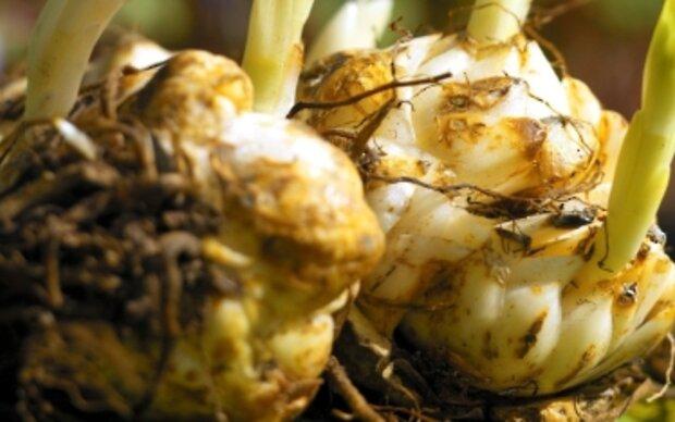 Nieselwetter ist ideal zum Blumenzwiebeln-Pflanzen