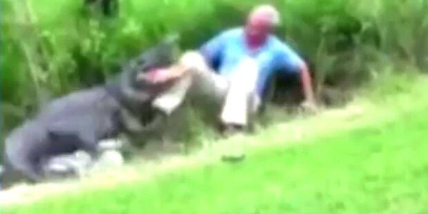 Alligator-Attacke mit viel Glück überlebt