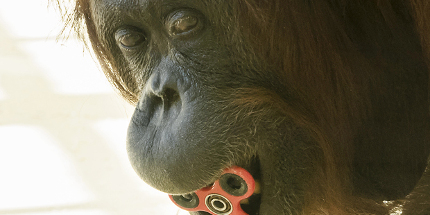 Orangutan Fidget Spinner