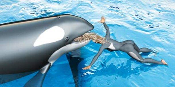 Orca Angriff Auf Menschen