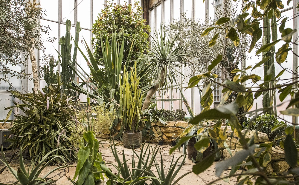 Palmenhaus - Garten-CH - Johannes Kernmayer - NaturLust # 14 - Seite 24
