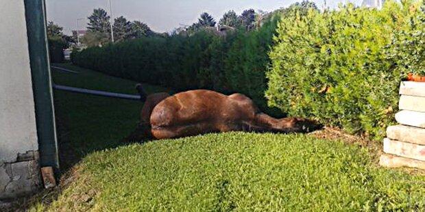 Wirbel um totes Pferd im Garten von FP-Politiker