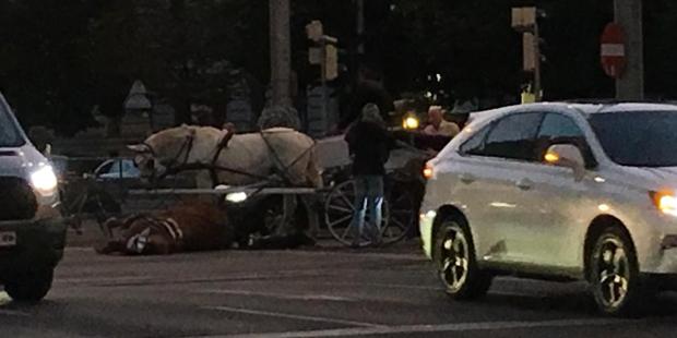Fiaker Pferd
