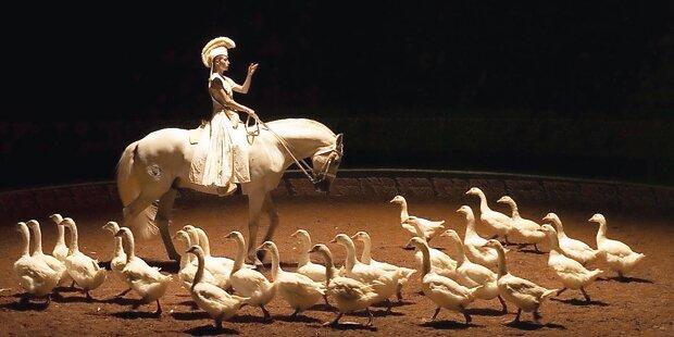Pferdeballett bei der