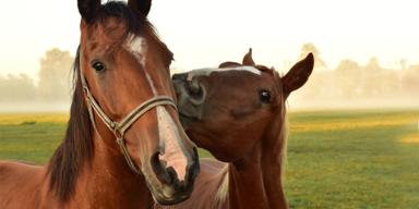 Pferde, Kuss - Unsere Tiere - Sendung 03112019 - Konsole