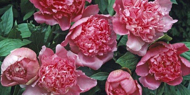 Romantik in Blüte