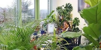 Pflanzen lassen Ecken und Nischen entstehen