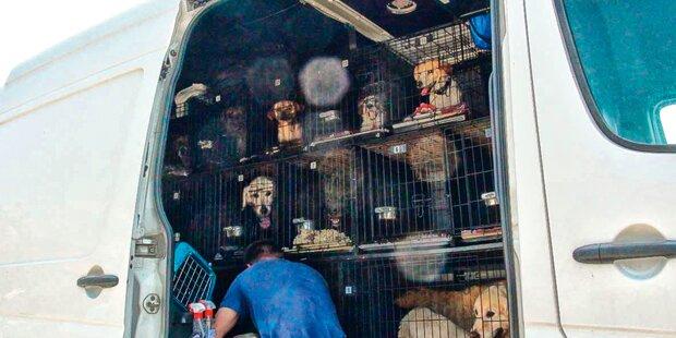 27 kranke Hunde aus Kleinbus gerettet