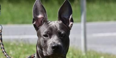Pfotenstube - ADV - Tierecke - Hund#4