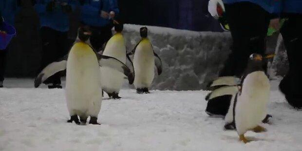 Dubai: Pinguine in der Wüstenstadt