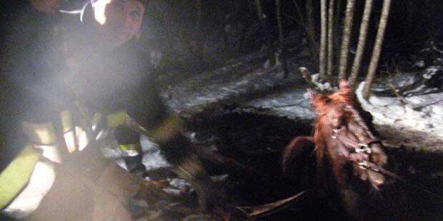 Feuerwehr rettet Pferd aus Sumpf