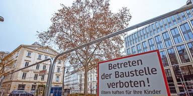 Ganz Wien will diesen Baum retten: Platane soll U-Bahn-Bau weichen