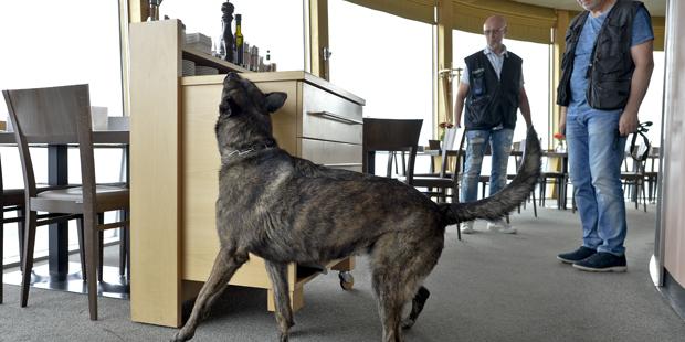 Polizeihunde Drogen Übung