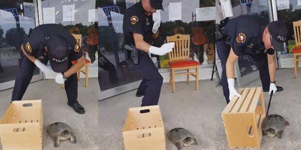 Polizist fürchtet sich vor Schildkröte und wird Hit im Netz