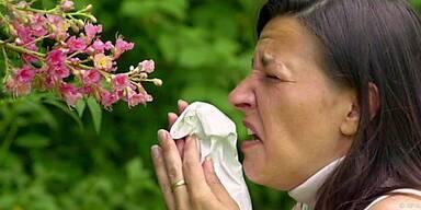 Pollen braucht man nicht auch noch in der Wohnung