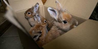 Kaninchen Aiderbichl