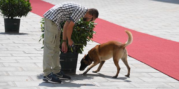 Putin Wien Spürhund