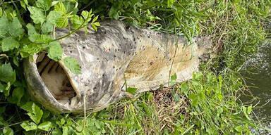 Rätselhaftes Tiersterben an der Raab in der Oststeiermark