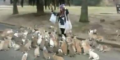 Viele Hasen verfolgen Parkbesucherin