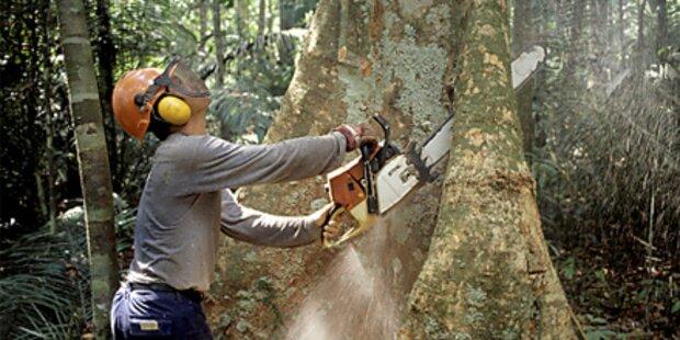 Regenwald-Abholzung eingedämmt