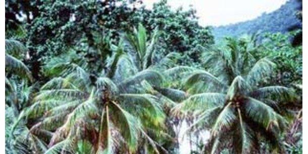 Guyana will Großbritannien Regenwald verkaufen