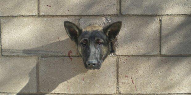 USA: Mauerloch wird Hund zum Verhängnis