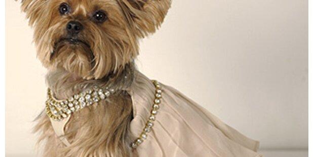 Doggie-Style für die Oscar Nacht
