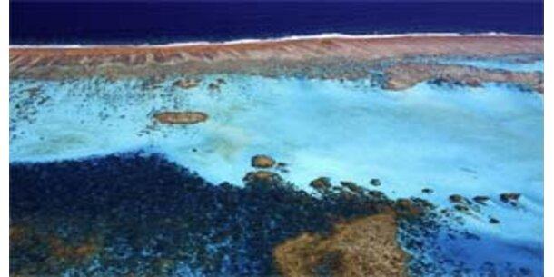 Greenpeace-Report zur Lage der Meere