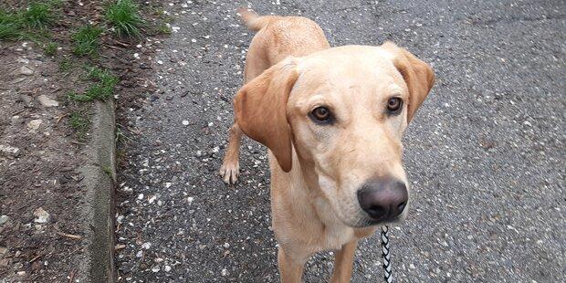 Geschockte Frauen kauften von Bettlerin Hund frei