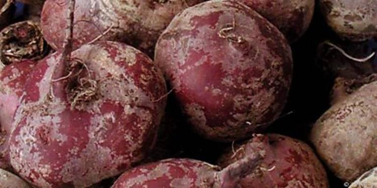 Rote Rüben enthalten viel Folsäure