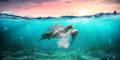 Schildkröte im Wasser mit Plastik