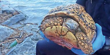 Schildkröte tot