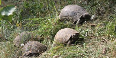 Schildkröten Wien
