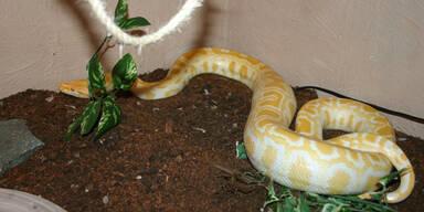 Tierquälerei: Mann lässt Reptilien verenden