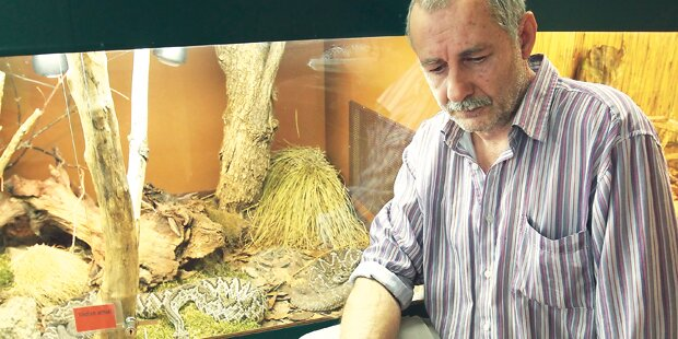 Schlangenbiss: So überlebte die Pflegerin