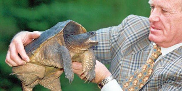 Angriff der Schildkröten