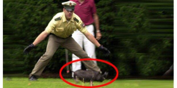Polizei rettete Schwein vor dem Fleischhauer