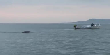 Kurios: Seemonster im Lough Foyle gesichtet