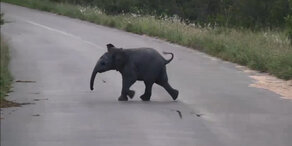 Babyelefant jagt Vögel