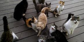 Nachbars Katzen haben hunger