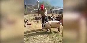 Statt Schwein zu schlachten, schlägt sich Bauer selbst K.o.