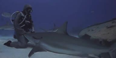 Haie streicheln für Fortgeschrittene
