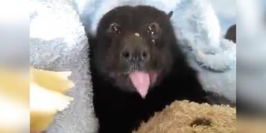 Süß! Fledermaus isst Banane