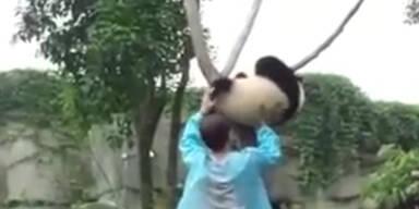 Pandas Baumrettungs-Aktion!