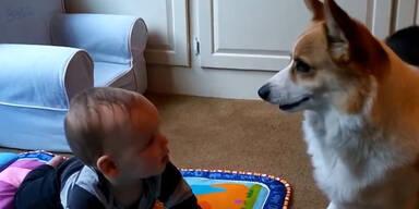 Hund macht Baby verrückt!