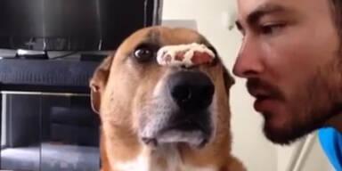 Dieser Hund will seinen Keks!